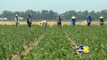 Three Valley farmworker deaths possibly heat-related