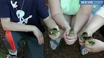 Ducklings fall into storm drain
