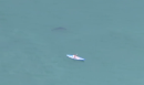 Man kayaks close to great white shark