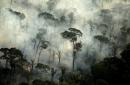 Brazil bans fires in Amazon rainforest as investors demand results