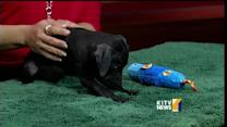 Pets on Set: Baby lab