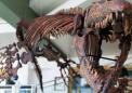Reptile dubbed 'Jaws of Death' terrorized Cretaceous seas