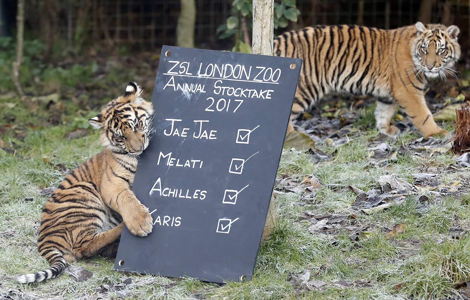 London Zoo begins annual residents count