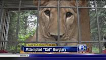 "Attempted ""Cat"" burglary in Ohio"