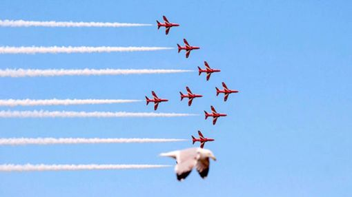 Oh Snap! 30 Most Perfectly Timed Photos Ever