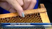 Beekeepers fear for future of honey bees