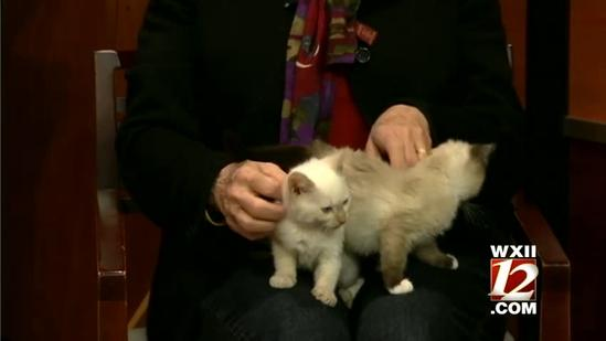 Pet Of The Week: Yeppy and Peresia