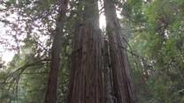Agencies look to protect Marin County?s Muir Woods
