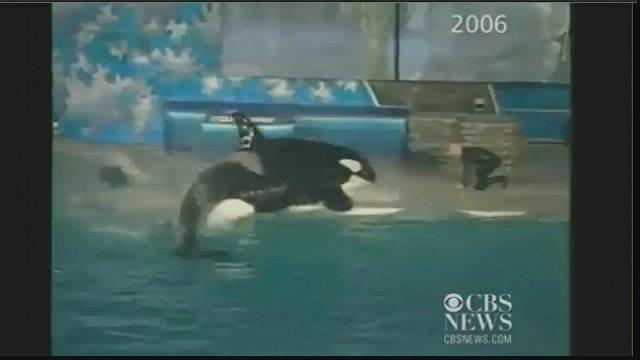 Raw Video: SeaWorld orca nearly drowns trainer