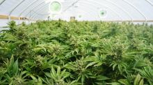 """Who Will Win the Battle to Become the """"Silicon Valley of Medical Marijuana""""?"""