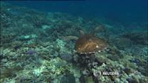 """Great Barrier Reef """"dying"""": scientists"""