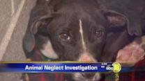 61 animals seized for neglect in Squaw Valley