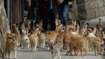 Japan island overrun by cats