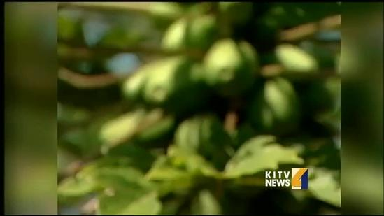 Kauai County Council passes GMO bill