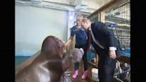 Russia's Putin feeds dolphins, shakes hands with walrus on trip to Russia's Far East