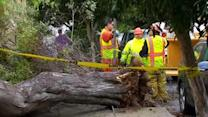 City budget cuts blamed for downed tree in SF