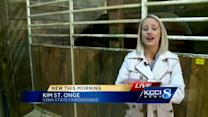 Horse bites KCCI reporter during live report
