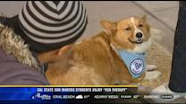 "Cal State San Marcos students enjoy ""fur therapy"""