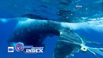 Instant Index: Humpback Whale Rescue Caught on Tape