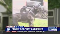 Man Who Shot Dog Could Be Charged With Torture