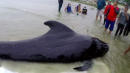 Whale Found In Thailand Dies From Eating Over 80 Plastic Bags