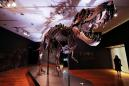 One of largest known T. rex skeletons up for auction at Christie's
