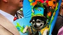 Feed: Easter parade of hats