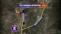 Police Discover Enormous Pot Growing Operation