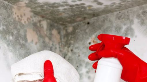 Worried How Much Professional Mold Removal Costs?