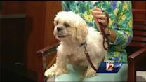Noon Pet Of The Week: Munchkin