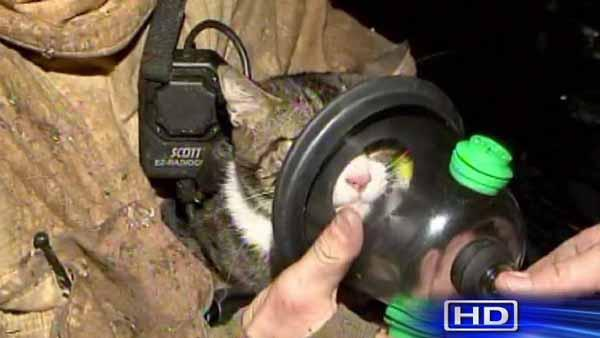 Overnight house fires blamed on heaters; Cat rescued