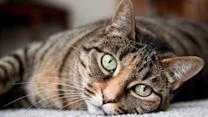 Cat allergy cure, Alzheimer's test, cancer screening changes