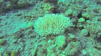 Red Sea coral reefs uniquely resilient, say Israeli researchers