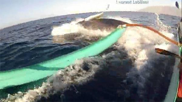 Whale bumps canoe off coast of Maui