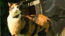 NZ Environmentalist: Get Rid of Killer Pet Cats