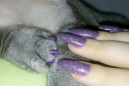 Glamorous pet owners are getting matching manicures with their cats