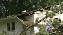 Strong winds bring down trees in Delaware