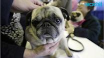 Dogs Only: Pet Therapy Recommendations Say No Cats