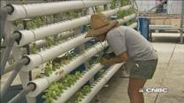 Growing greens go high-tech in Singapore