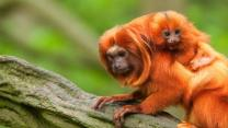 10 Animals Humans Have Saved From Extinction