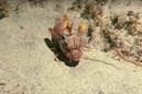 This video of a fish 'walking' along the ocean floor is making scientists scratch their heads