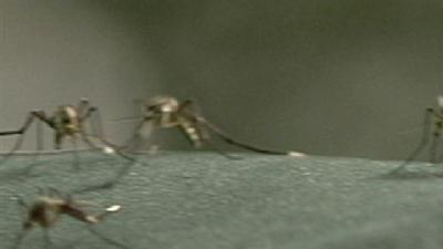 Rain Leads To More Mosquitoes