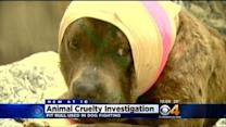 Dog Found Abandoned In Alley With Severe Injuries
