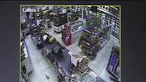 Surveillance camera captures six men roughing up a clerk while robbing a 7-11 in Tampa
