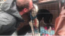 Sweet Pup Can't Stop Licking Rescuers After Being Saved From Florence Flooding