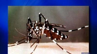 Mosquitoes Invade York County