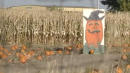 Parents Leave Child At Corn Maze, Don't Realize It Until Next Day: Cops